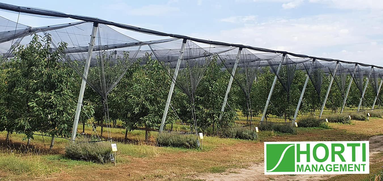 Consultanță specializată în producerea fructelor